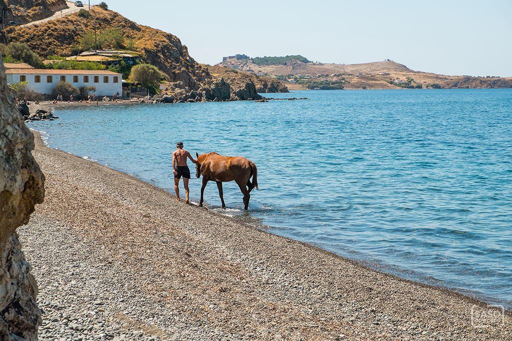 Golden-beach-lesvos-DSCF0840